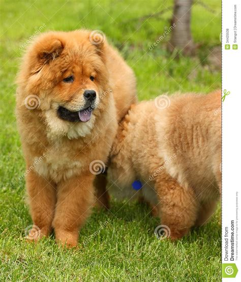 Two Dogs In A Park Royalty Free Stock Photos - Image: 34425538