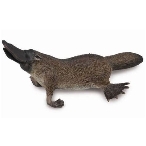 CollectA Platypus 88795 | Free Shipping